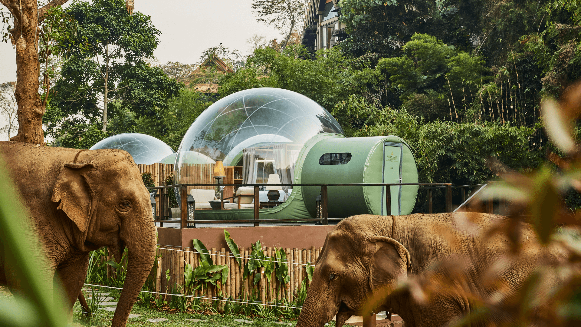 Anantara Golden Triangle Jungle Bubbles