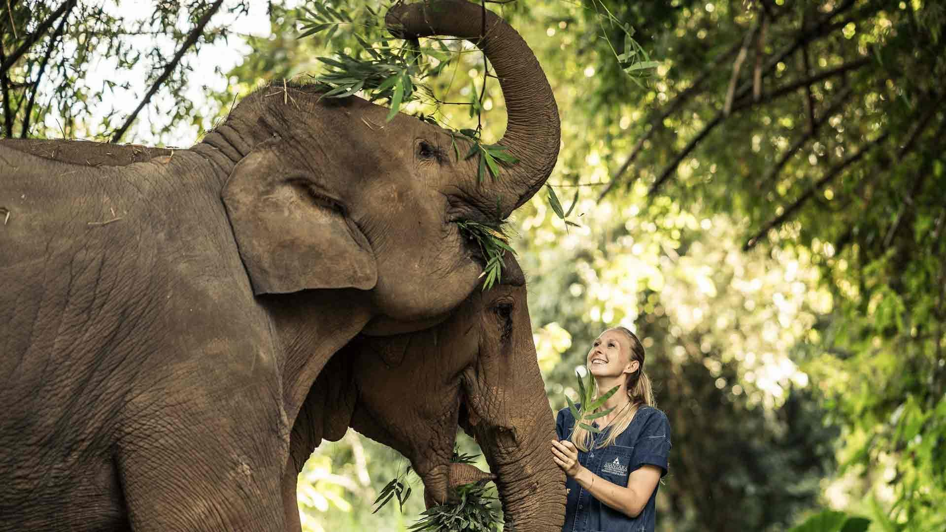 Anantara_Golden_Triangle_Elephants_property_banner_20190808