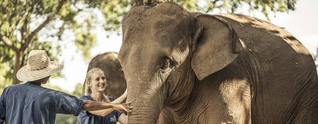 Spende an die Golden Triangle Asian Elephant Foundation