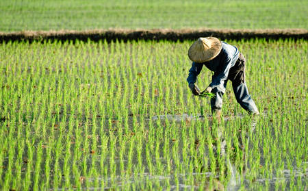 Anantara_Golden_Triangle_RICE-PLANTING-EXPERIENCE