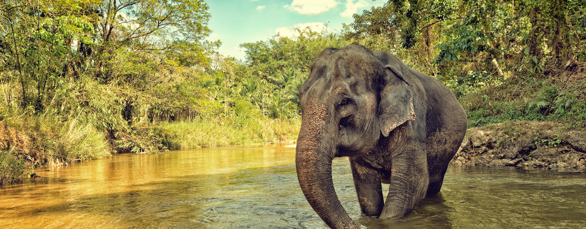 AN-Layan_Elephant-Sanctuary