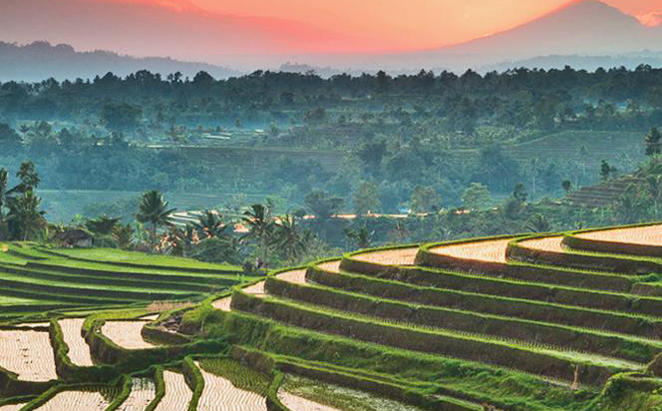 Anantara_Seminyak_HALF-Day-Trip-to-Ubud-and-Spiritual-Tour