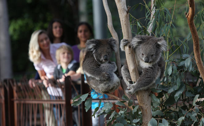 The-Larwill-Studio_Trip-to-Melbourne-Zoo