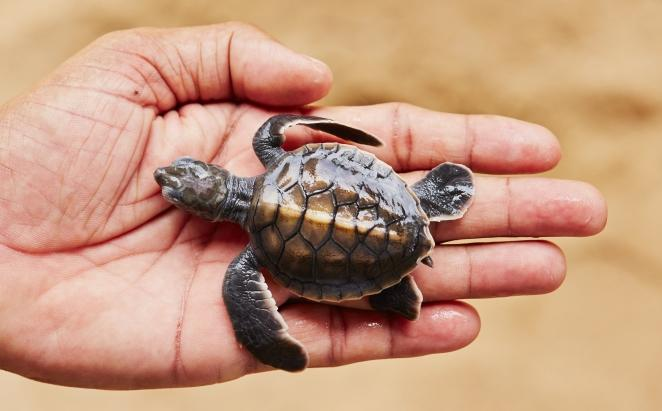 turtle hatchery lifestyle image