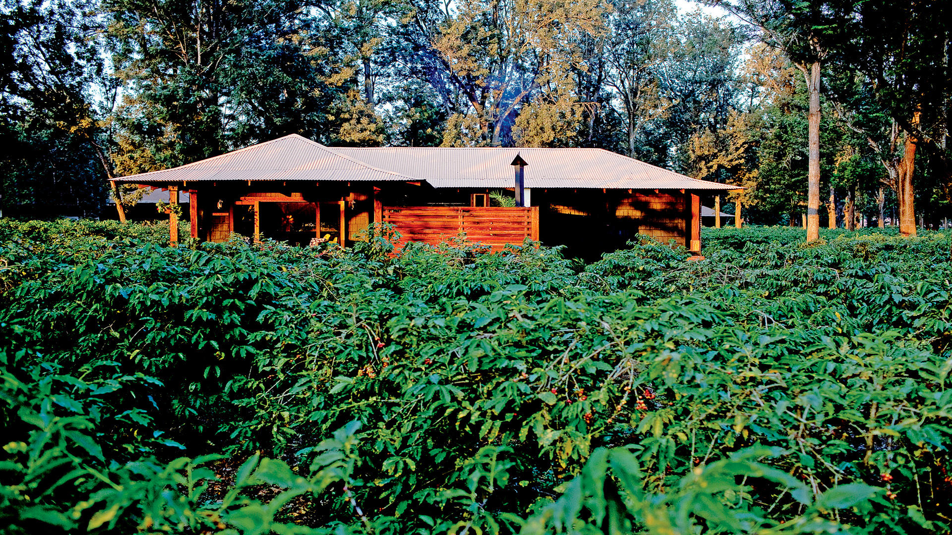 Arusha-Coffee-Lodge---Plantation-Suite-Exterior-View