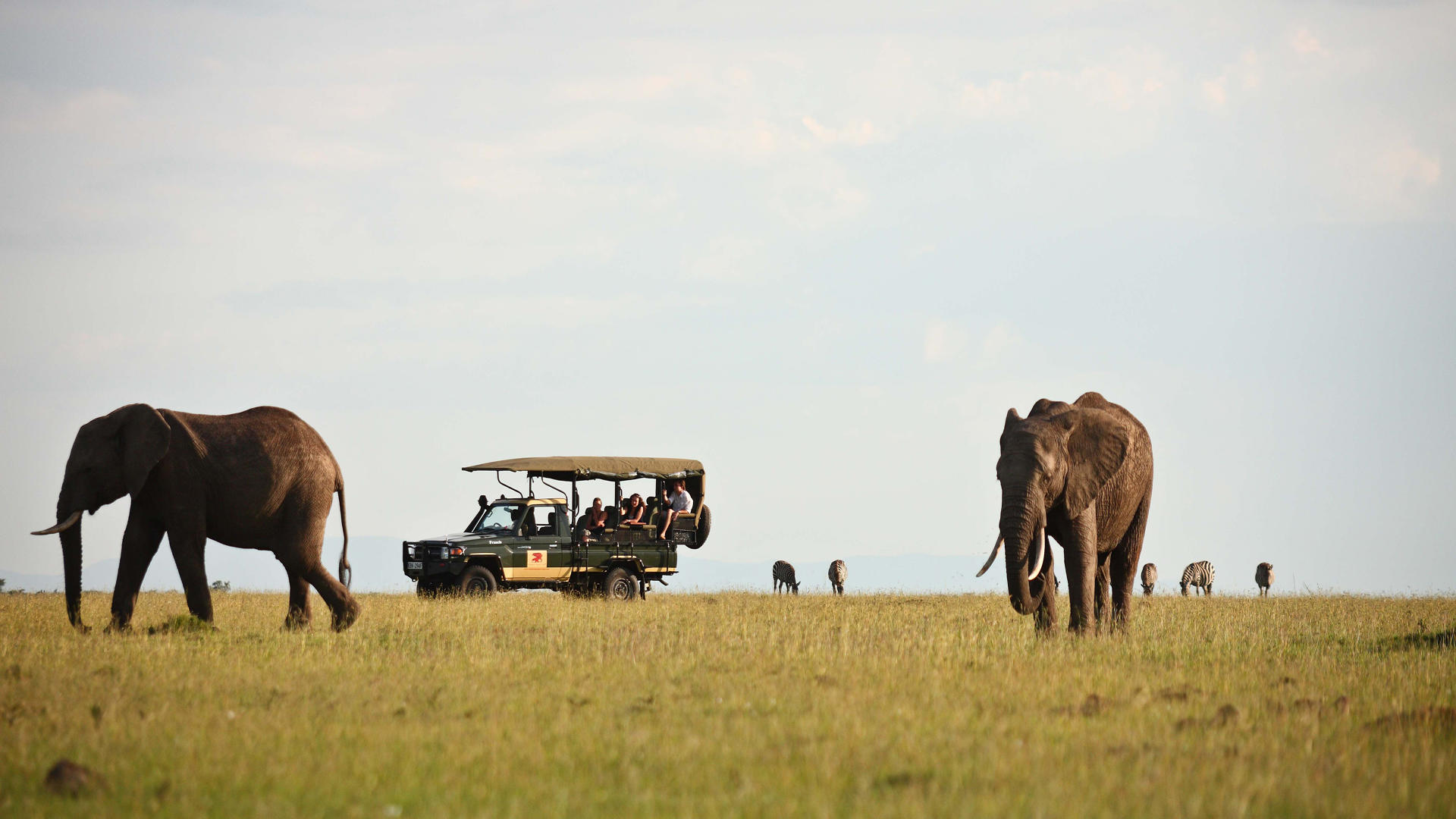 Elephant-Pepper-Camp---Game-Drive----Elephants