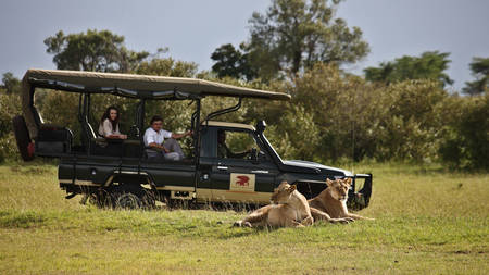 Elephant-Pepper-Camp---Game-Drive---Lions