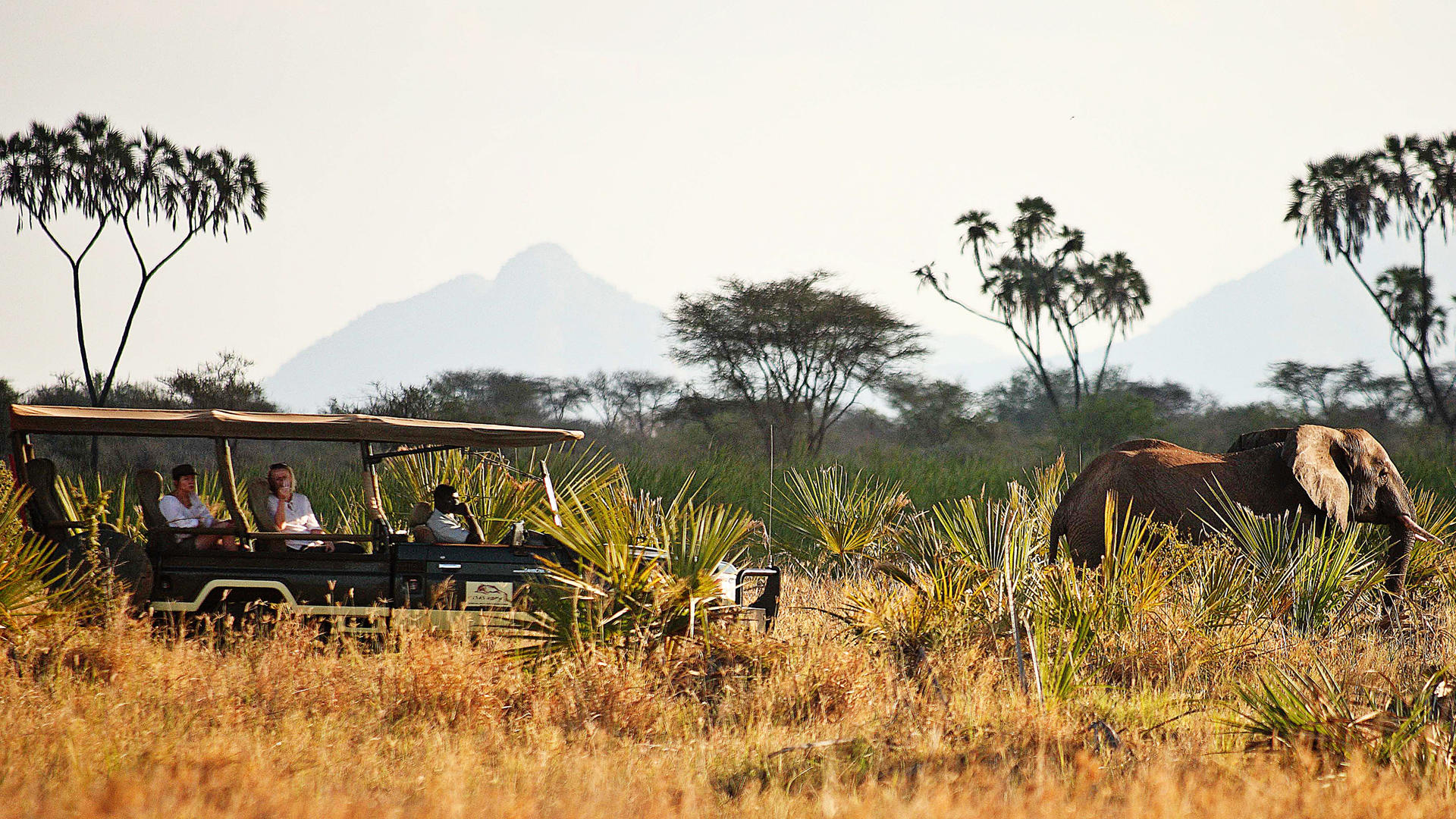 Elsa's-Kopje-Meru-Game-Drives---Elephants