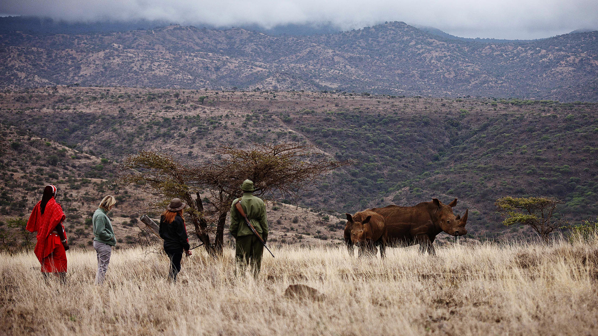 Lewa-Safari-Camp---Guided-Walks