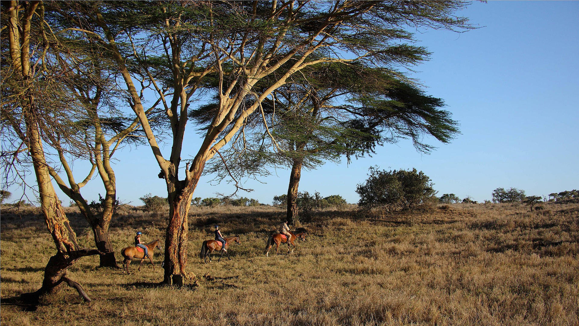 Lewa-Safari-Camp---Reiten