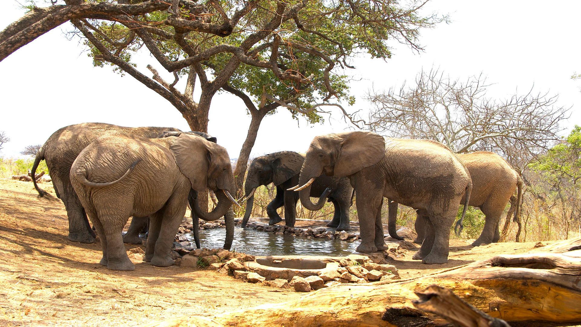 Tarangire-Treetops---The Waterhole