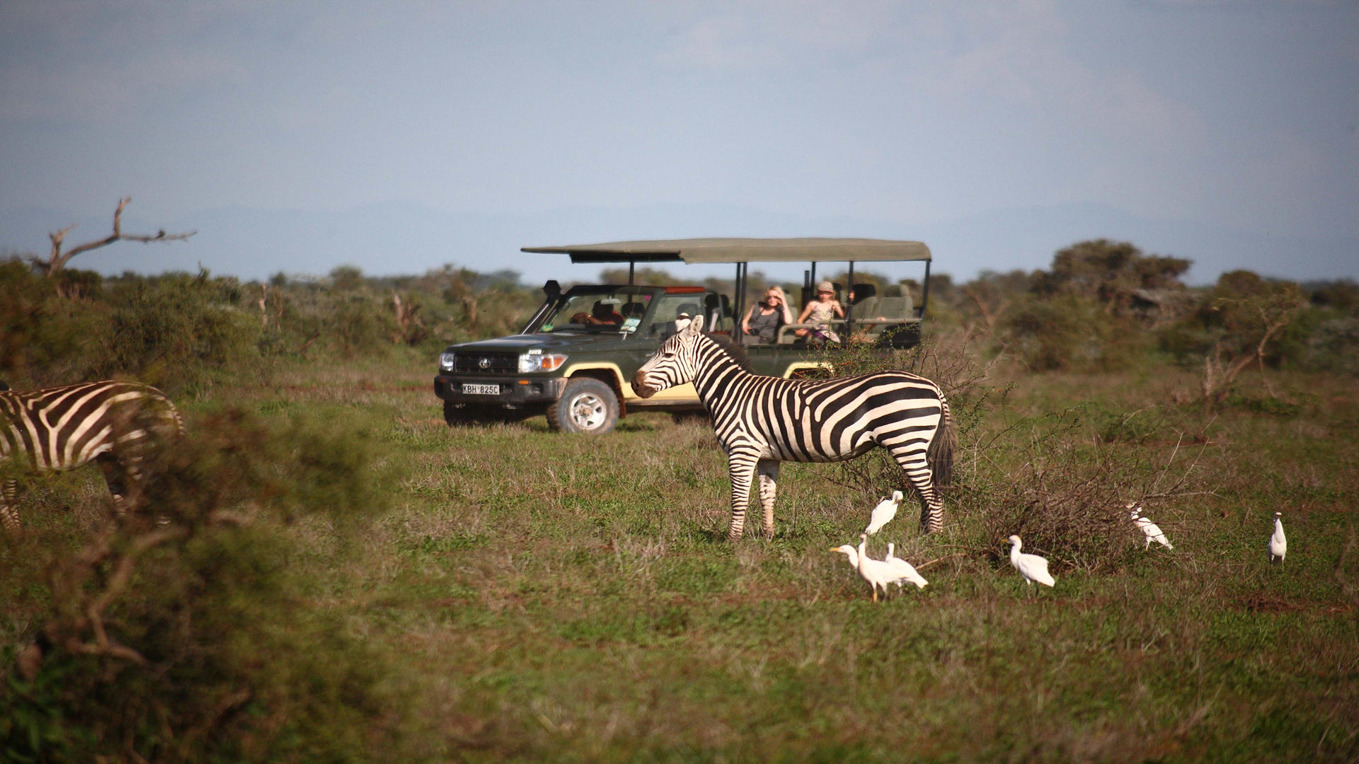 Tortilis-Camp-Amboseli---Game-Drive---Zebra