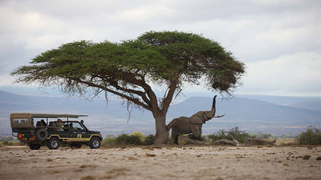 Tortilis-Camp-Amboseli---Game-Drives---Elephant