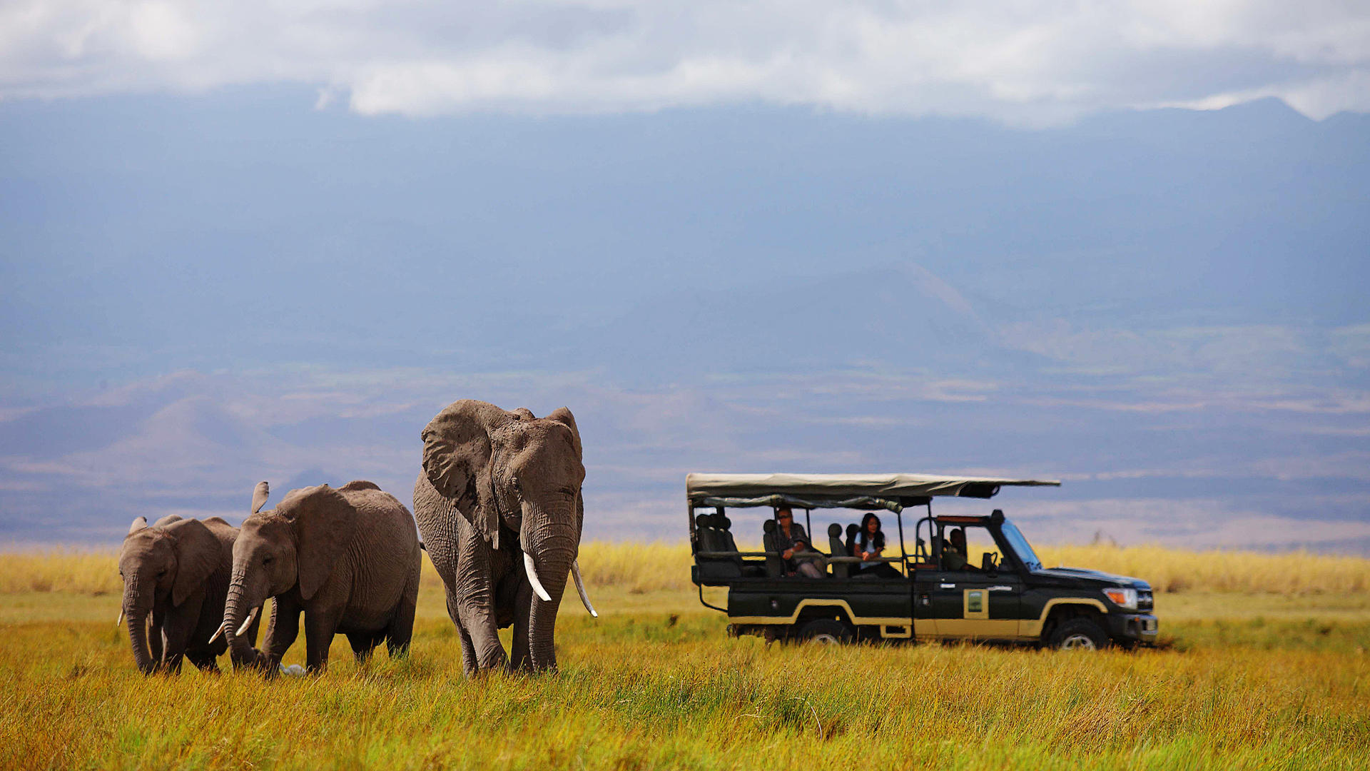 Tortilis-Camp-Amboseli---Game-Drives