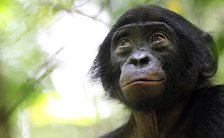 KIFIH1_Wonderful-Bonobo-Park