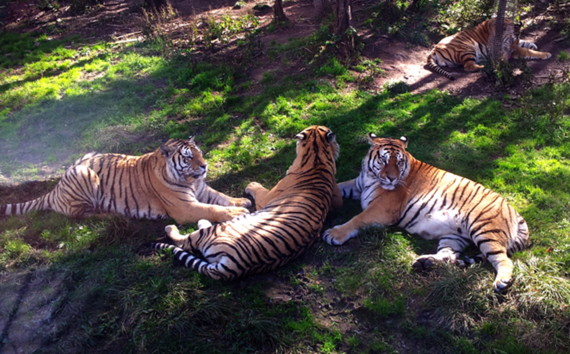 Kempinski Hotel Harbin_Harbin Tiger Park Ticket for Two