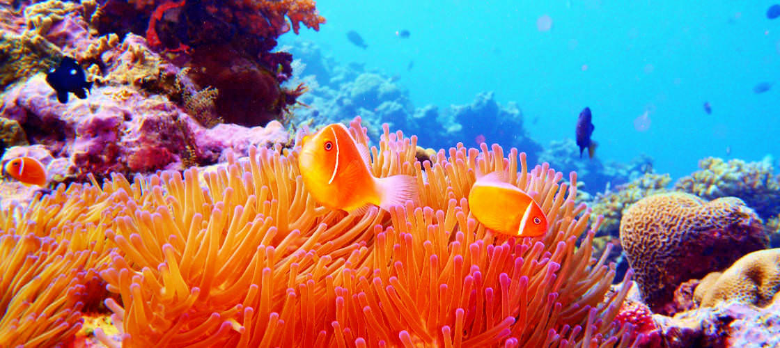 Full Day Outer Great Barrier Reef Snorkel Cruise