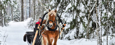 OM-Mount-Washington_Sleigh-Ride