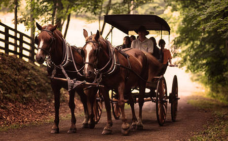 Omni _ Homestead _ Carriage