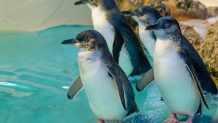 Explore Penguin Island with the Family Image