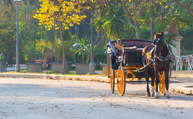 PPTianjin_Horse-Carriage-Tour