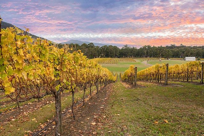 RGRVQTM-yarra-valley-wine-tour
