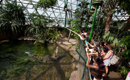 Rydges_Esplanade_Cairns-Wildlife-Dome