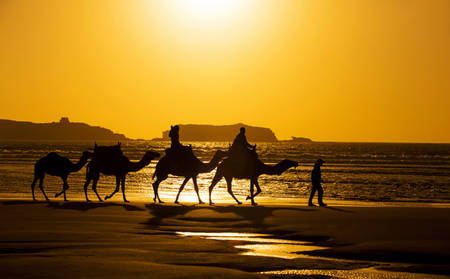 Rydges_Port-Macquaire_Beach-Camel-Ride
