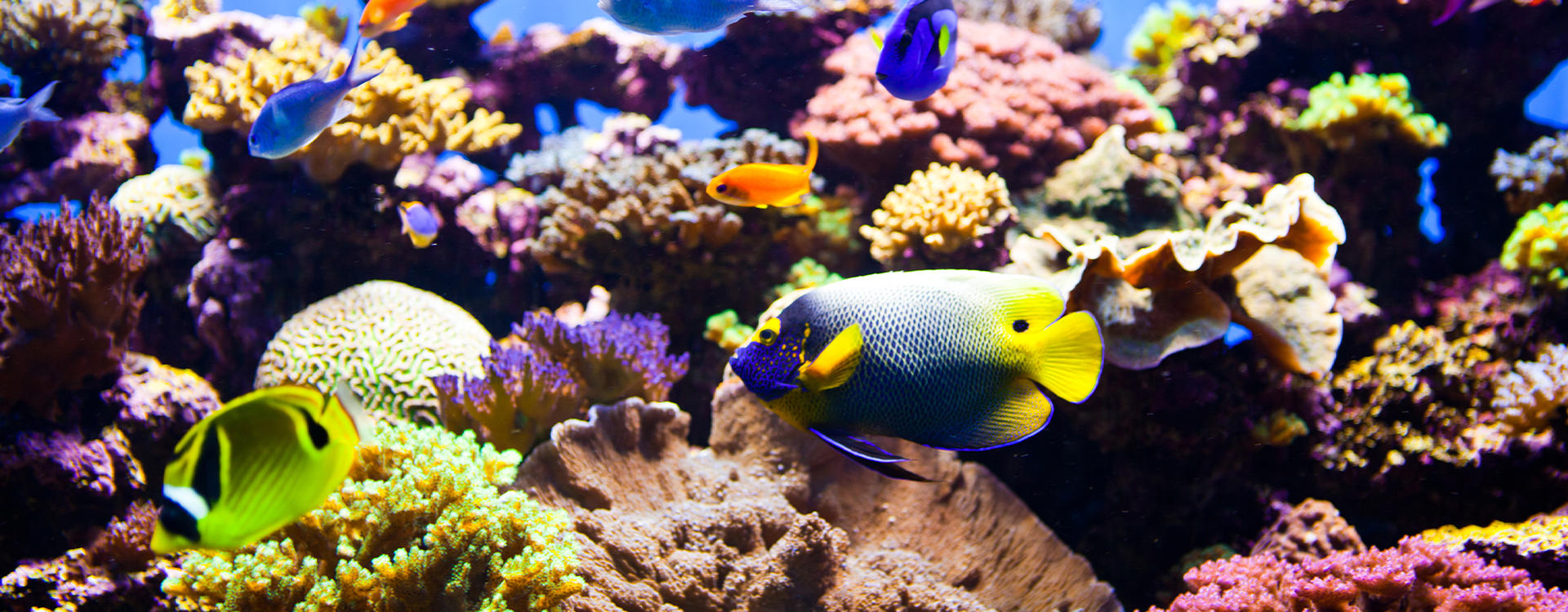 RG- Southbank - Townsville _Visit-Reef-HQ-Aquarium