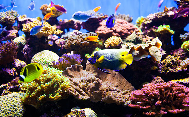 RydgesSouthbankTownsville_Reef-HQ-Aquarium