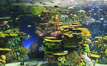 Rydges_Sydney-Airport_Sealife-Aquarium-Tour